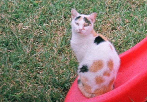 החתולה קויוטה (לא צולם באינדי נגב)